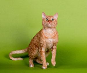 cat-0128