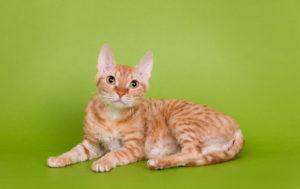 cat-0740